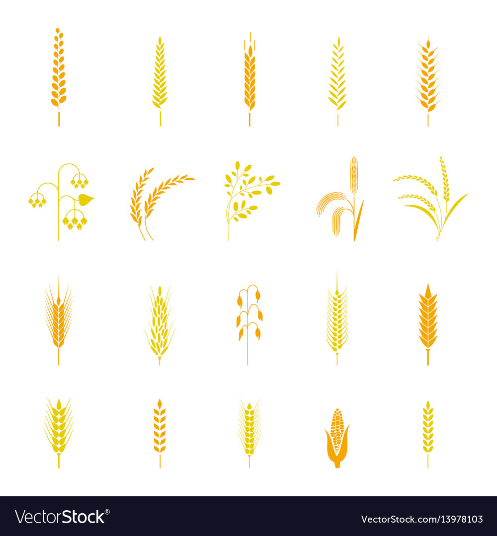 Wheat ears or rice icons set vector image