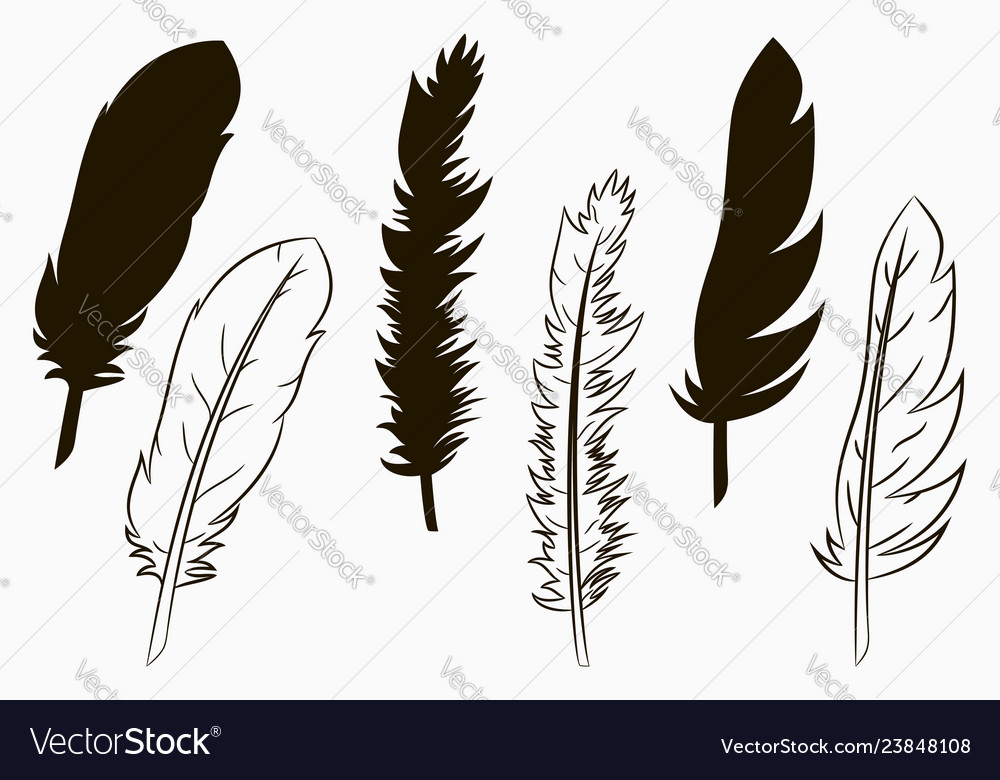 Feathers of birds