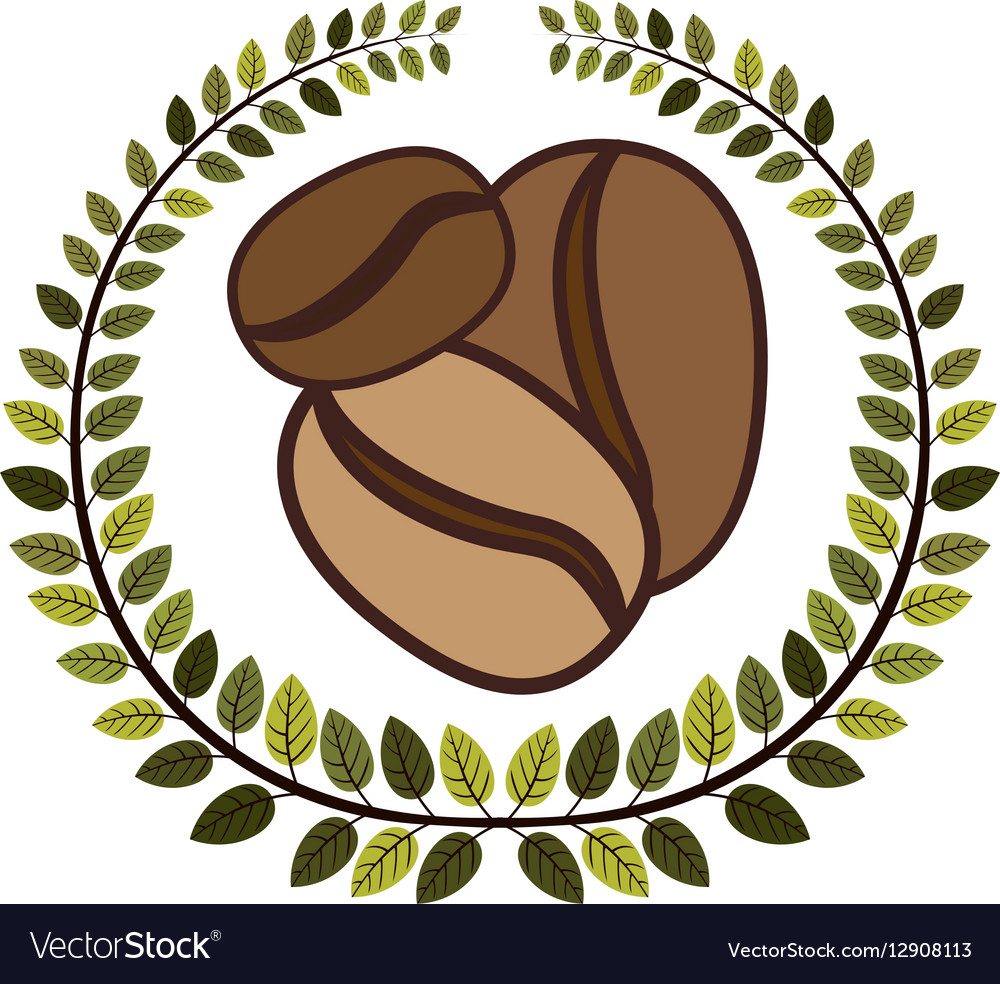 Crown of leaves with coffee beans in different vector image