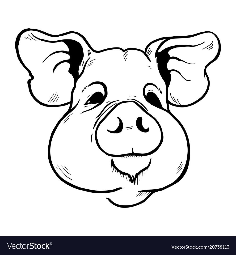 Pig head sketch vector image