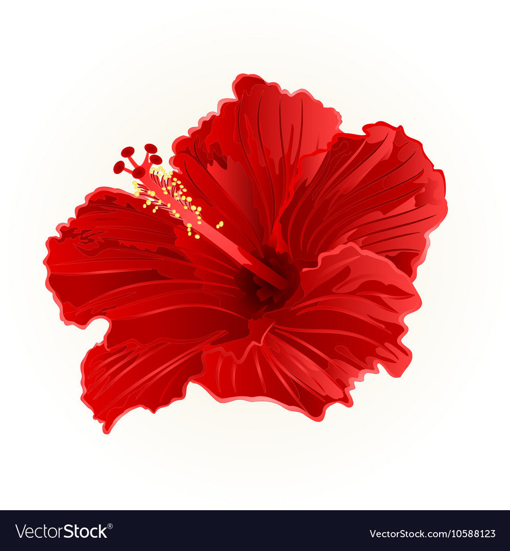 Red Hibiscus Simple Tropical Flower Vintage Vector Image