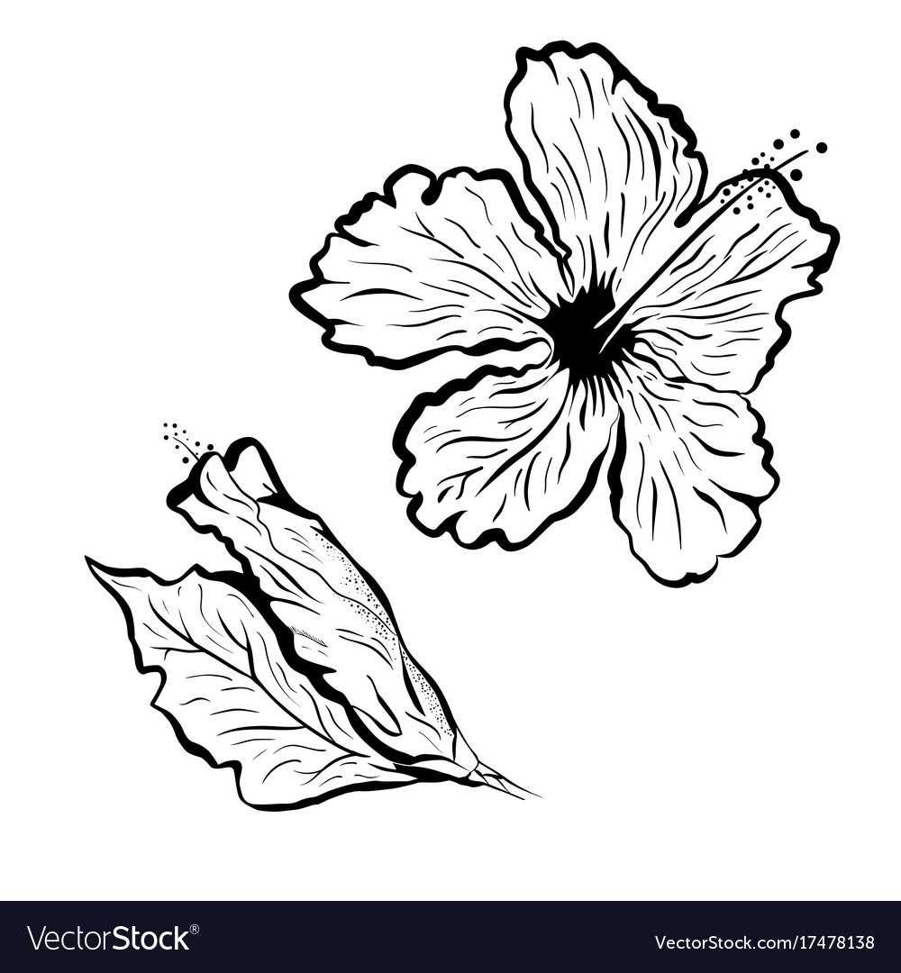Hibiscus flower in tattoo style black and white vector image izmirmasajfo