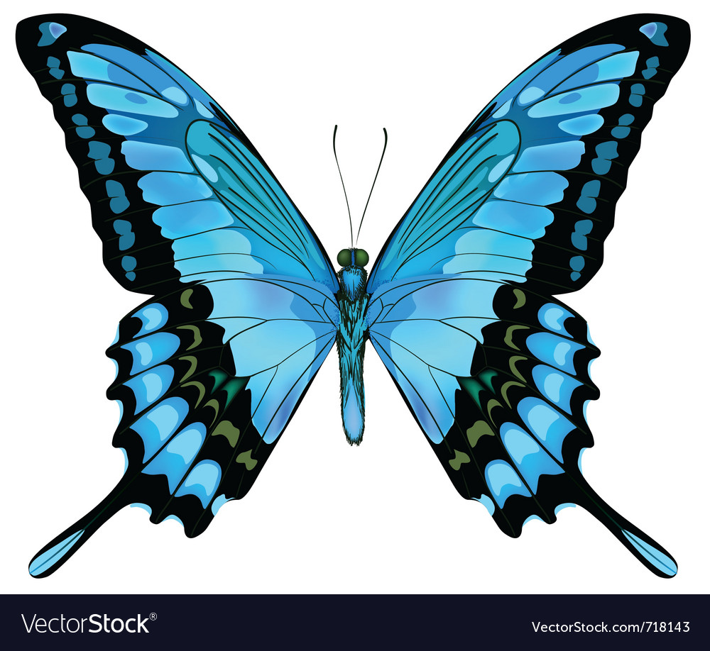 Beautiful Isolated Blue Butterfly Royalty Free Vector Image