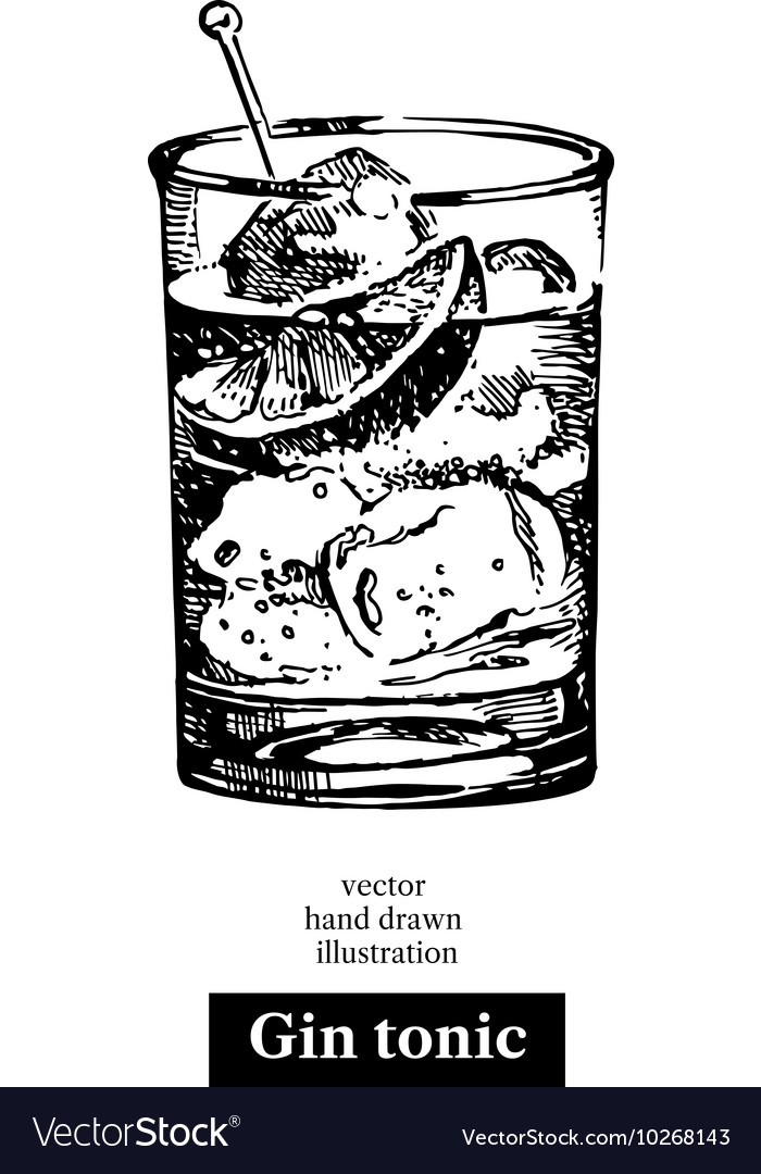 Hand drawn sketch cocktail gin tonic vintage vector image