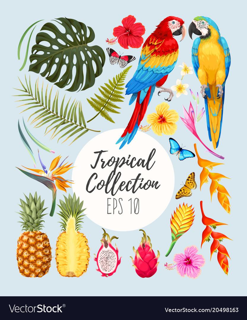Tropical set