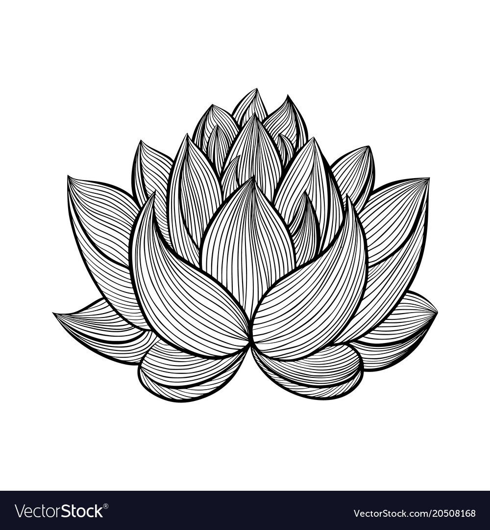 Lotus Flower Different Vector Images 43
