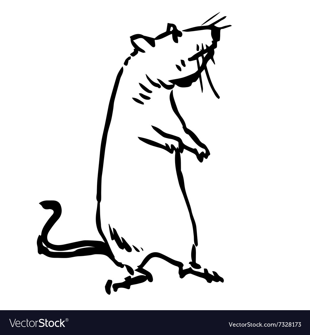 Rat mouse vector image