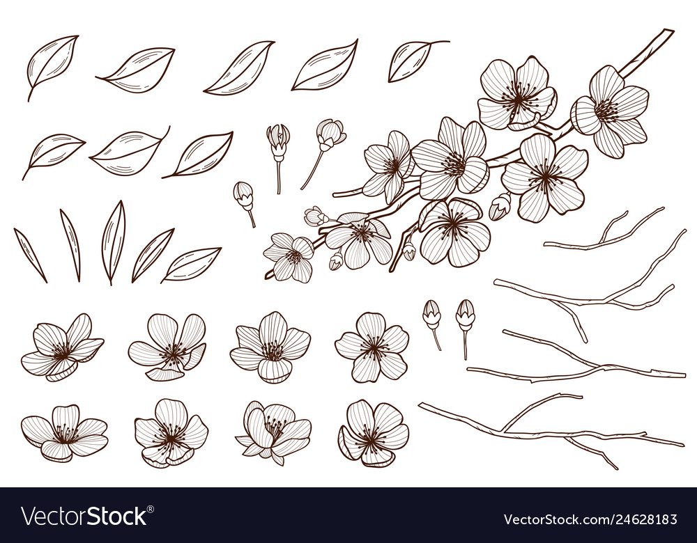 Almond blossoms hand drawn set spring flowers