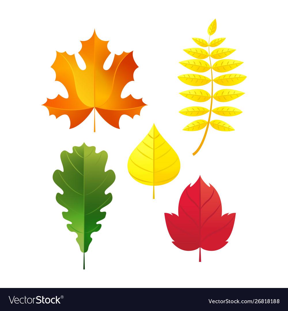 Autumn Leaves Set Simple Fall Leaf Cartoon Flat Vector Image