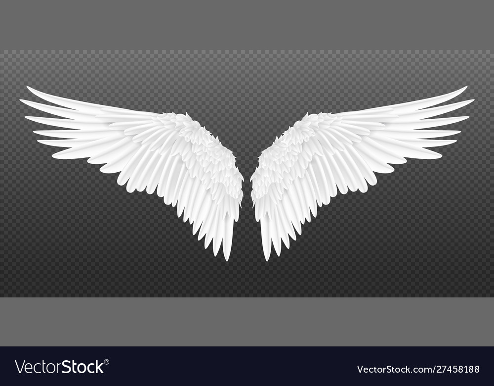 Realistic wings pair white isolated angel