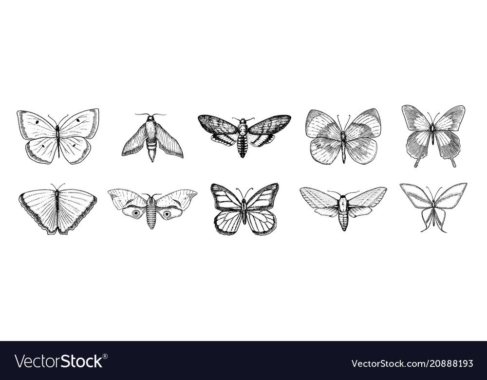 Collection of butterfly or wild moths insects