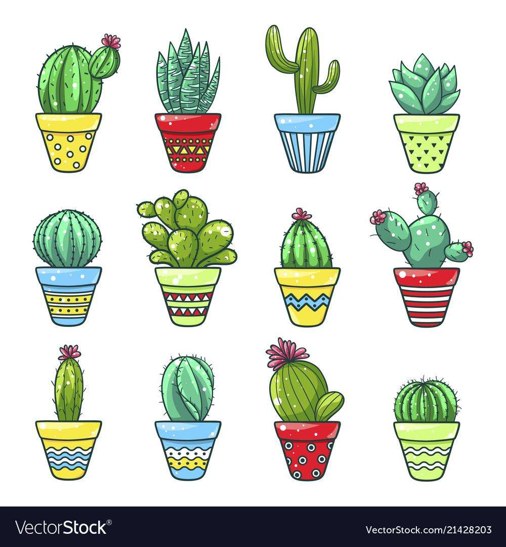 Home cactus set