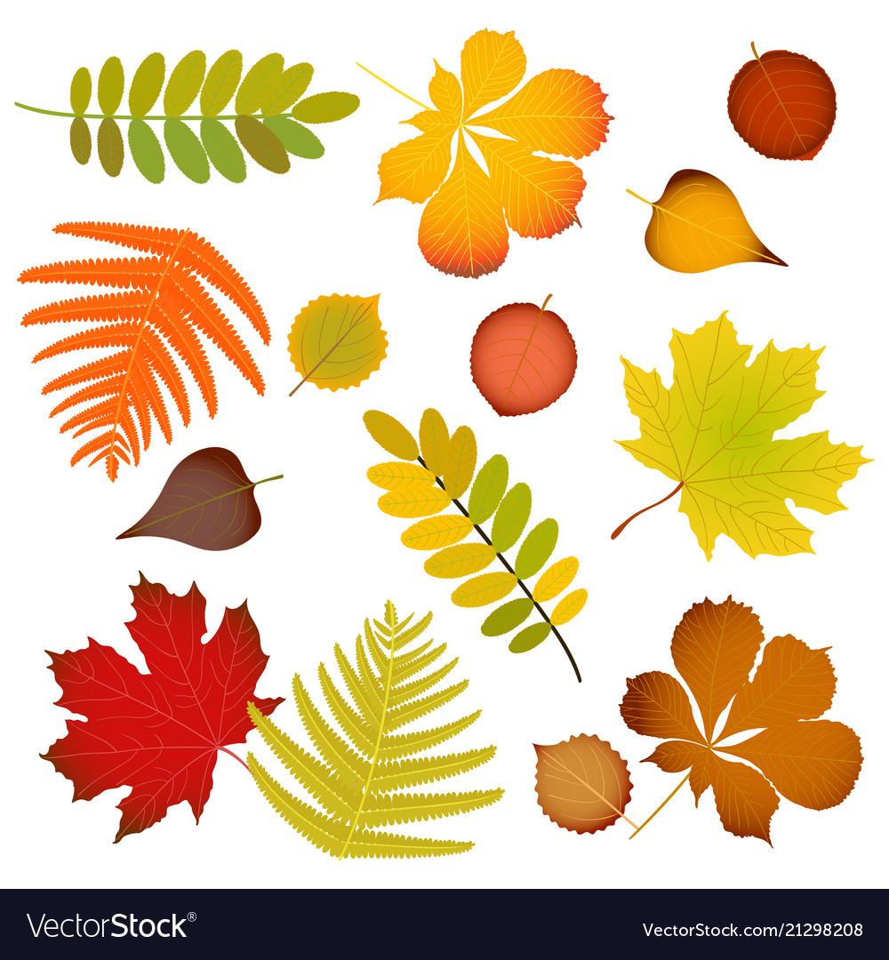 Autumn leaves set isolated