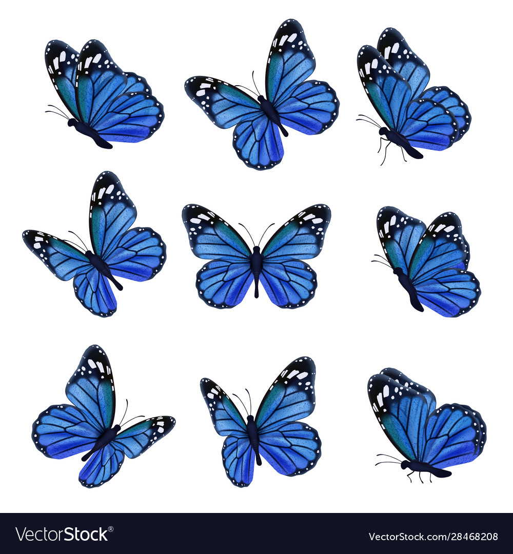 Colored butterflies flying beautiful insects