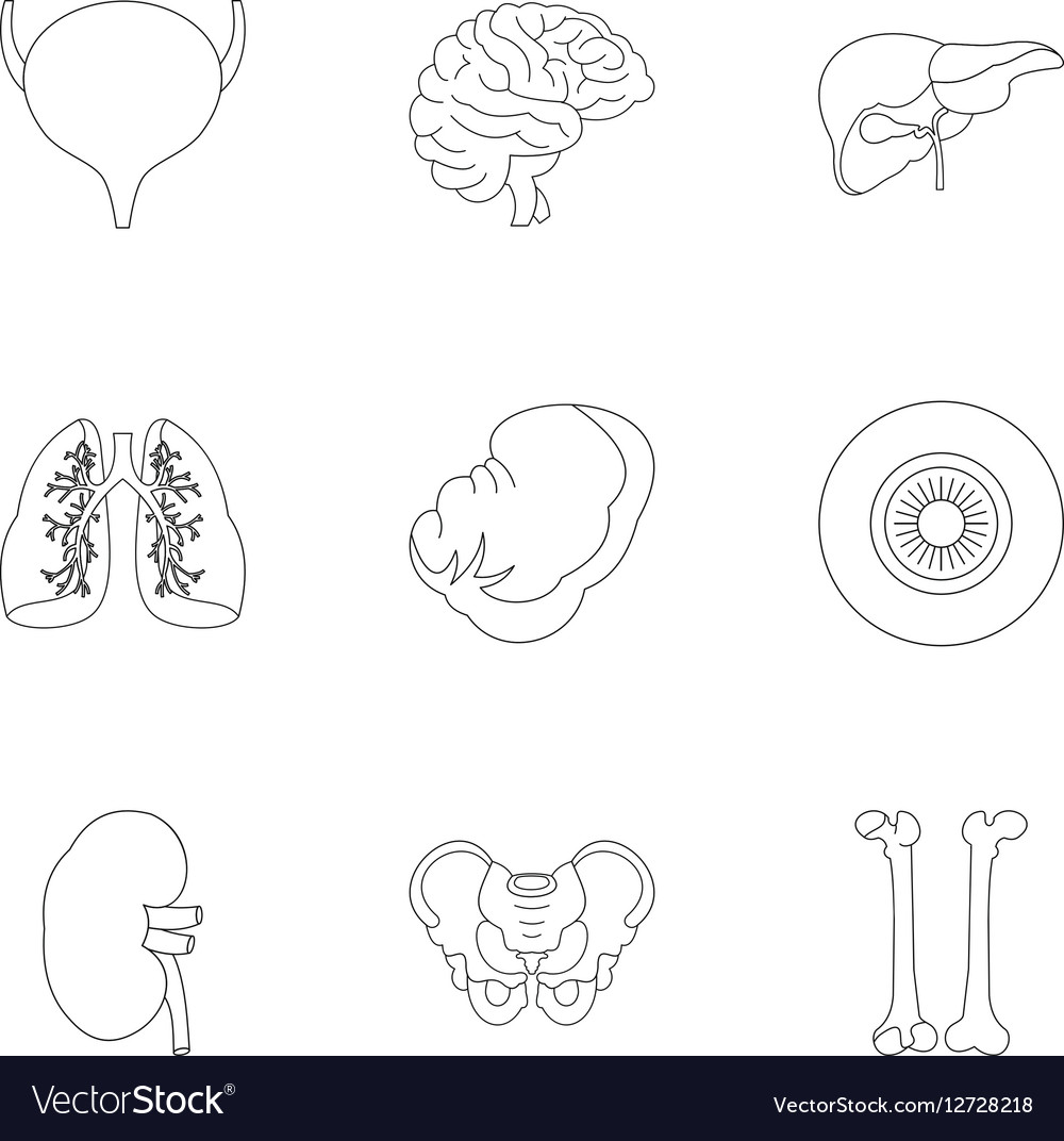 Human organs icons set outline style