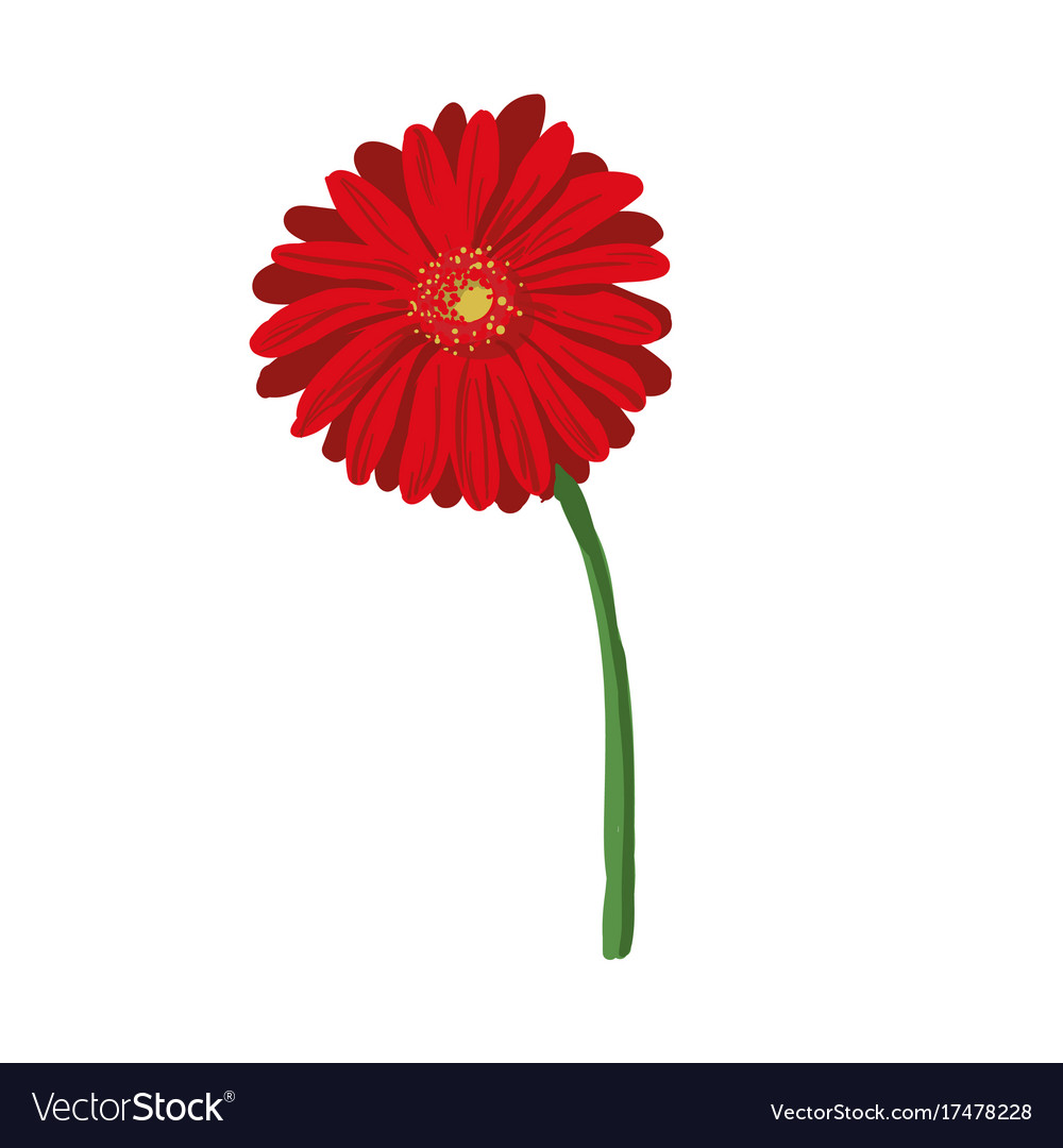 Red Flower On White Background Natural Elegance Vector Image