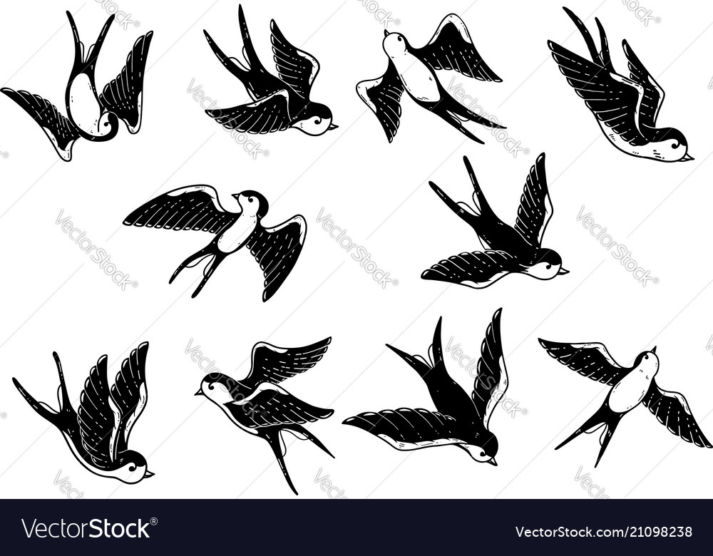 Set of hand drawn swallow on white background