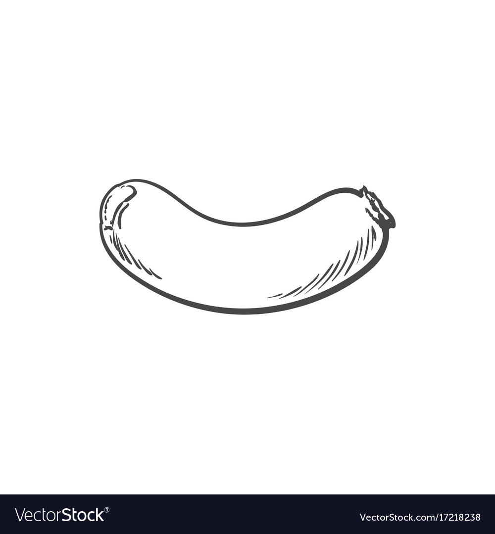 Sketch sausage isolated vector image
