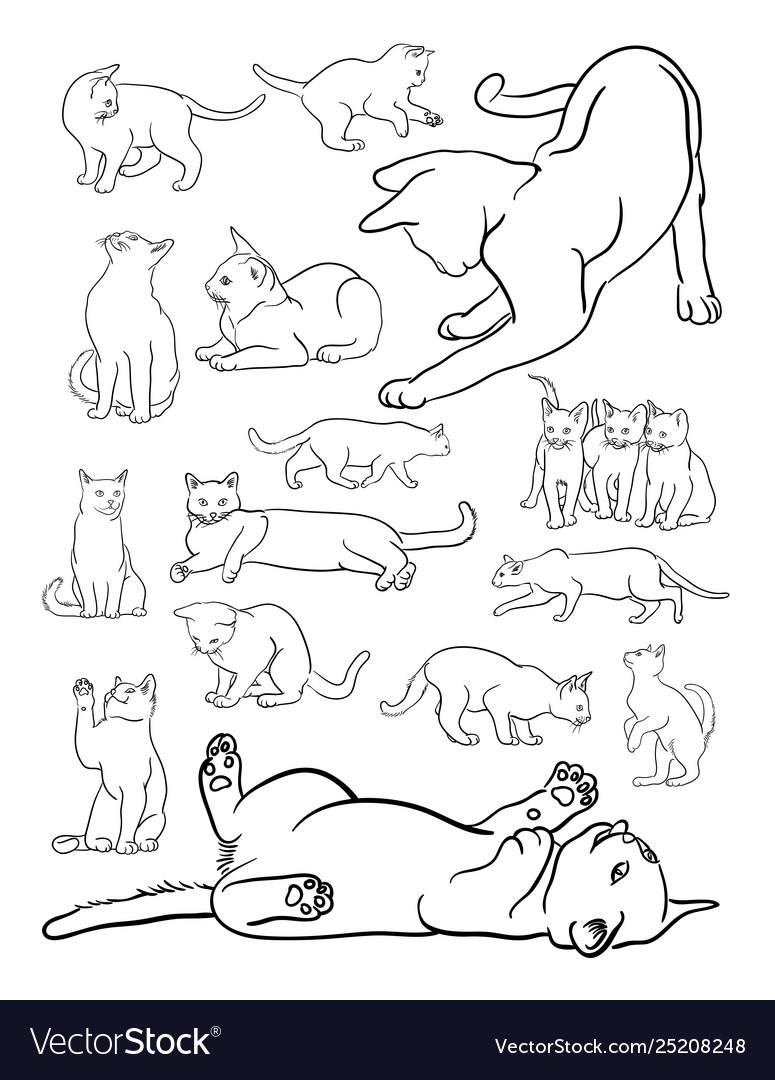 Cat animal line art