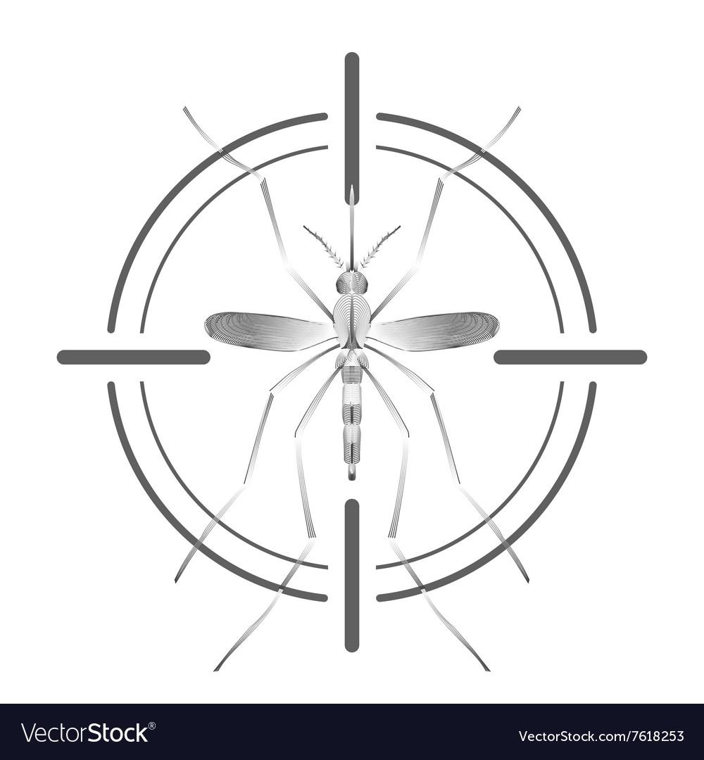Fever mosquito species aedes aegyti in grey aim