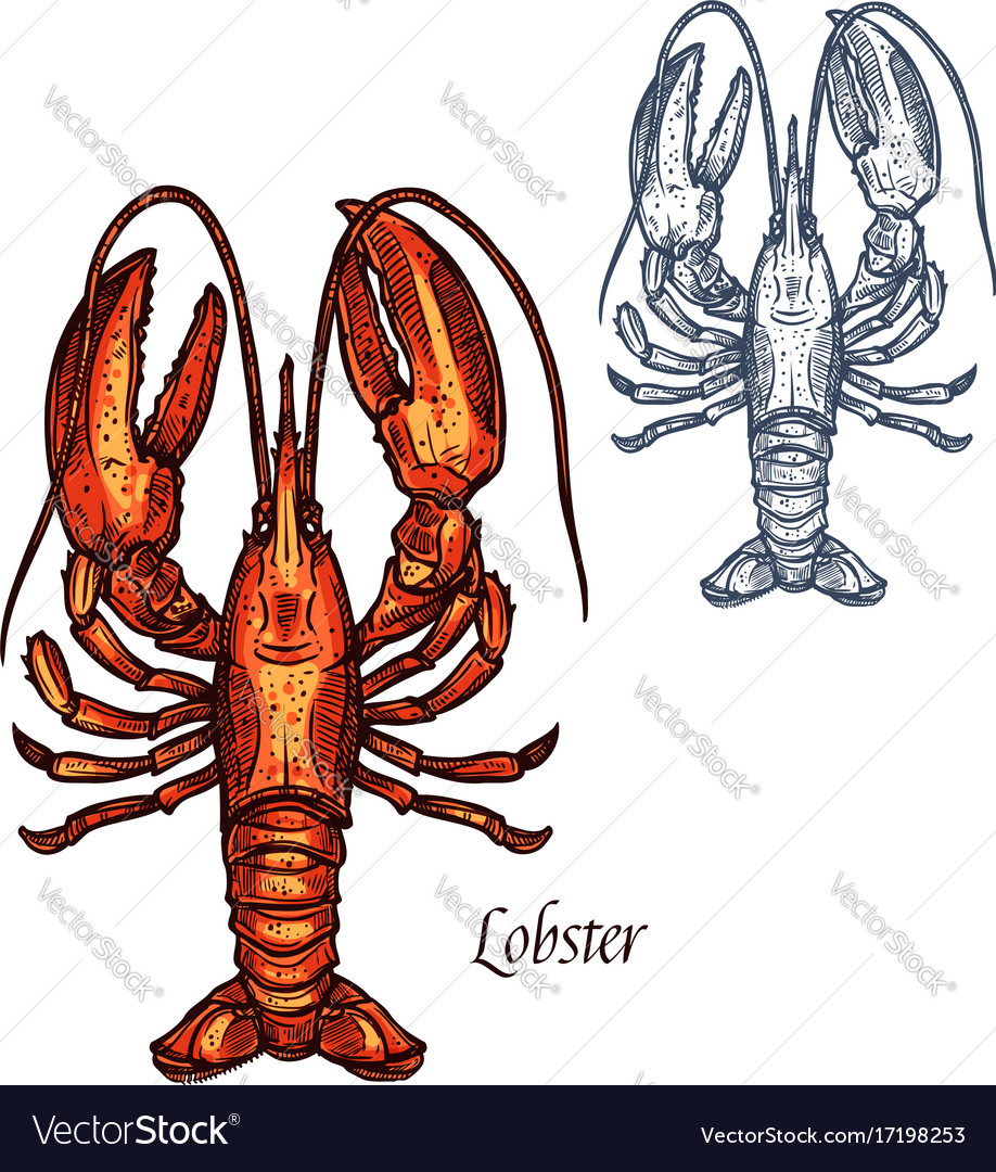 Lobster seafood isolated sketch icon