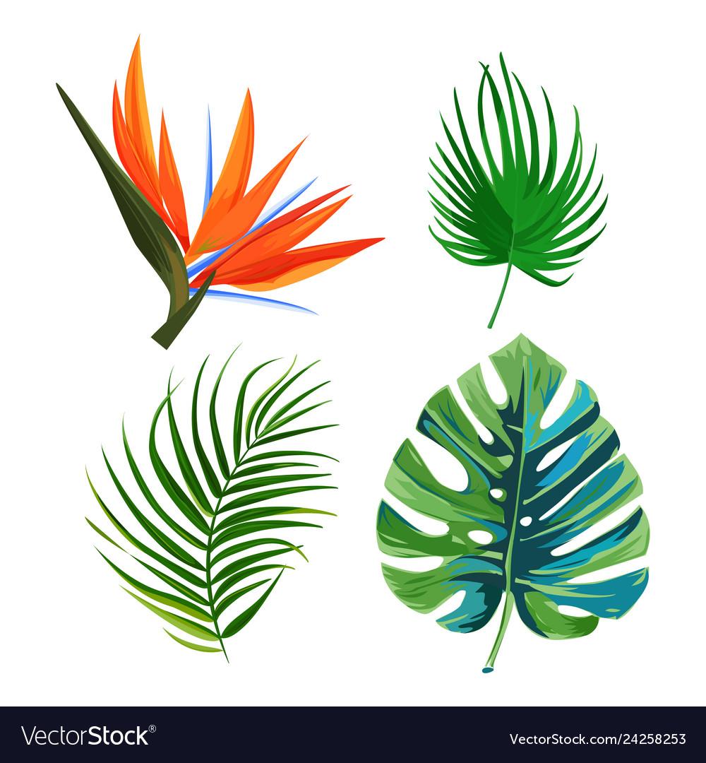 Palm Leaves Flower Bird Of Paradise Strelitzia Vector Image