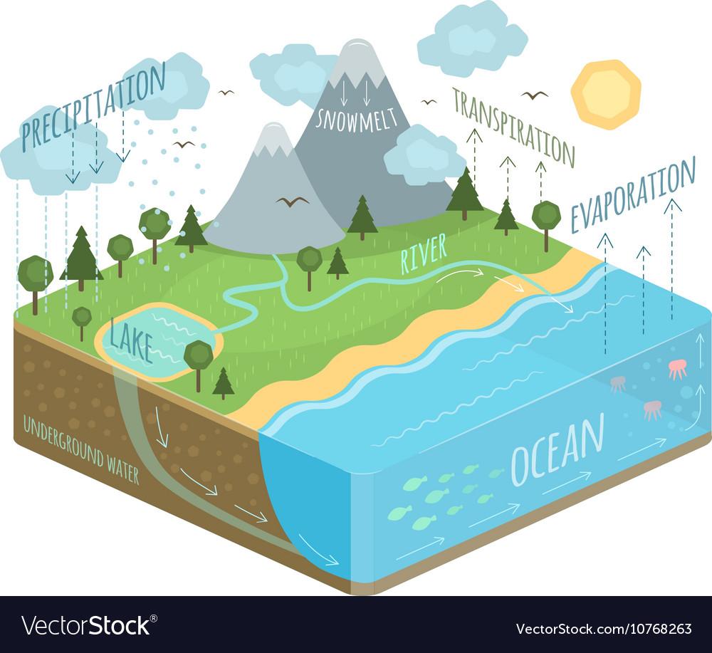 Water Cycle Diagram Royalty Free Vector Image