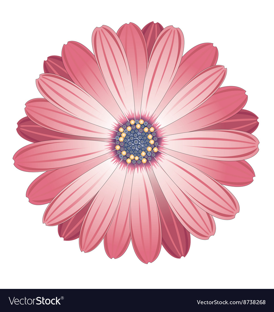 Flower pink seamless pattern background vector image