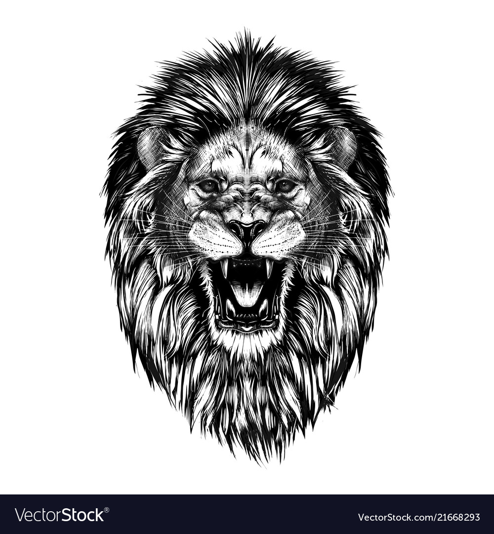 Hand drawn sketch lion head in black isolated