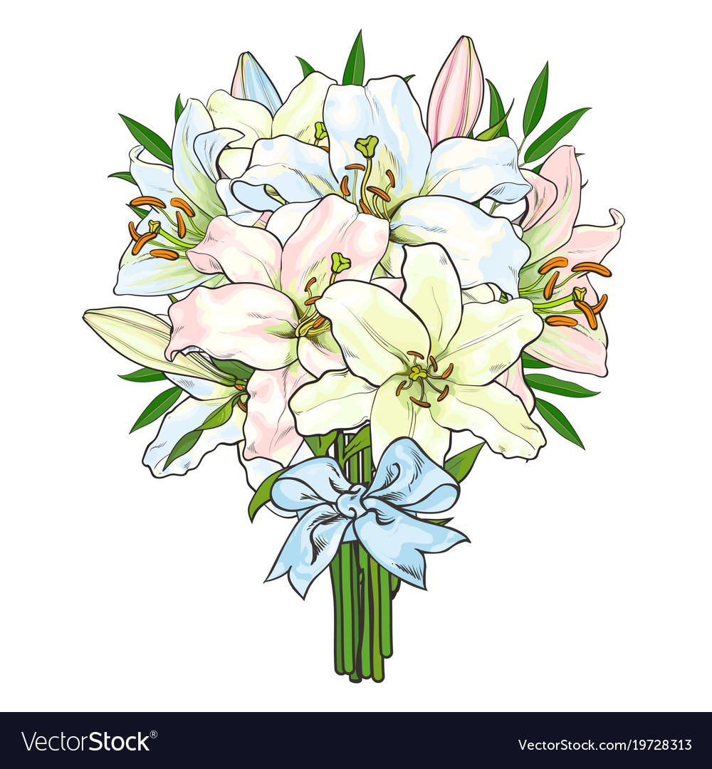 Bouquet bunch of lily flowers tied with ribbon vector image izmirmasajfo