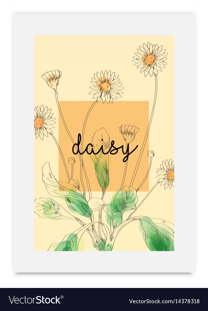 Daisy hand drawn painted watercolor