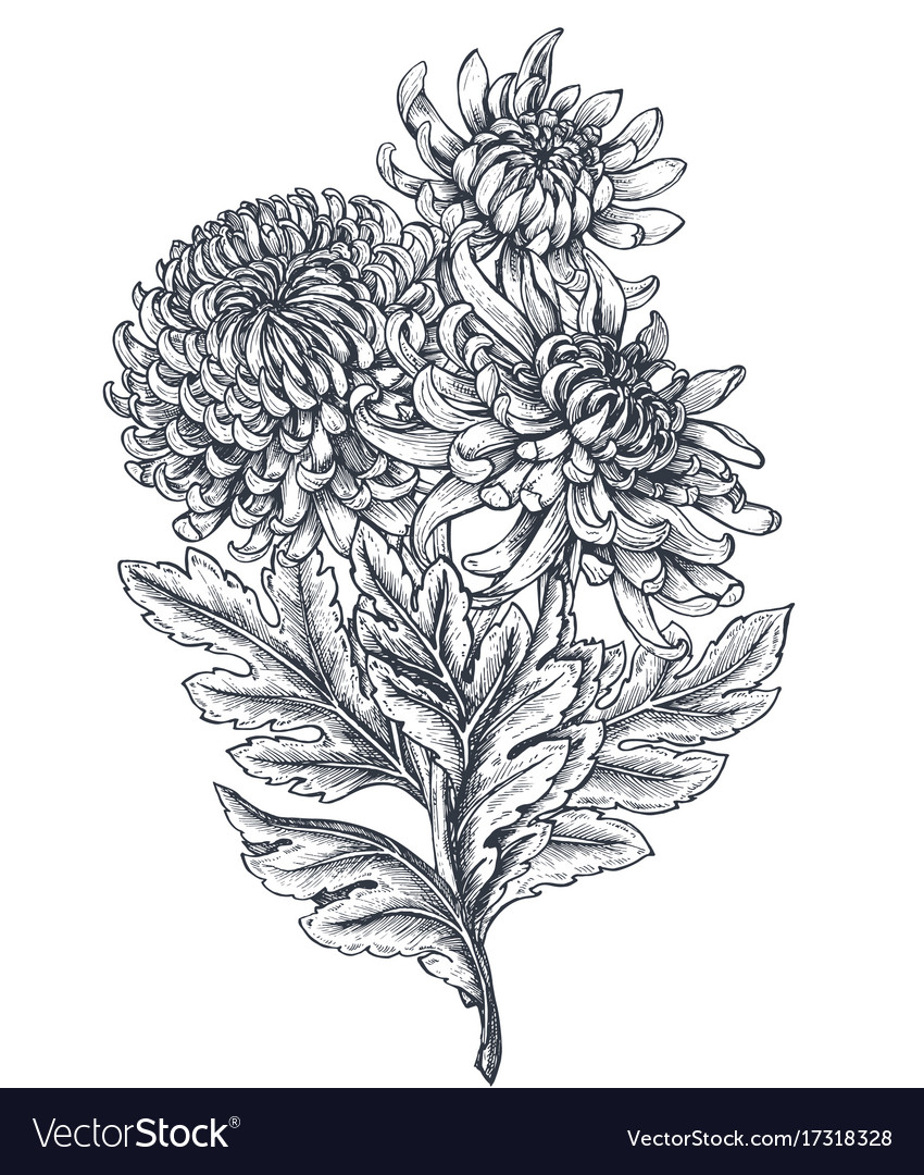 Bouquet with hand drawn chrysanthemum