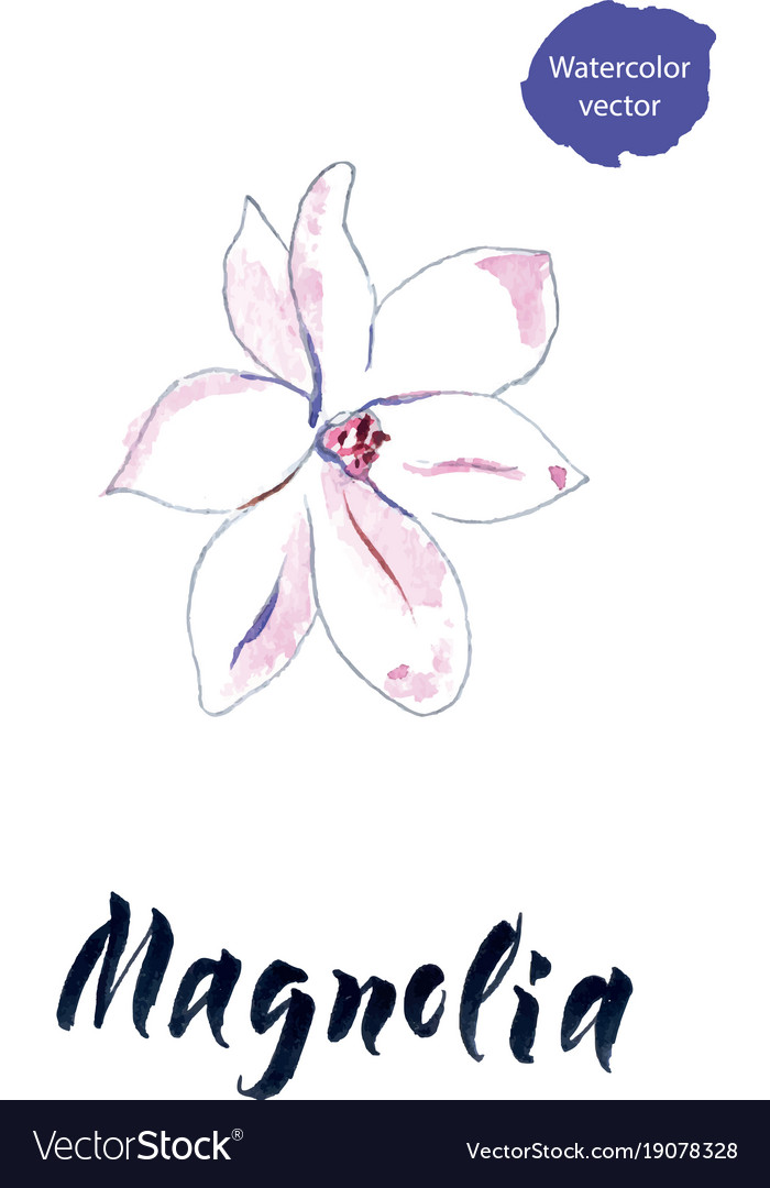 Flower of magnolia watercolor