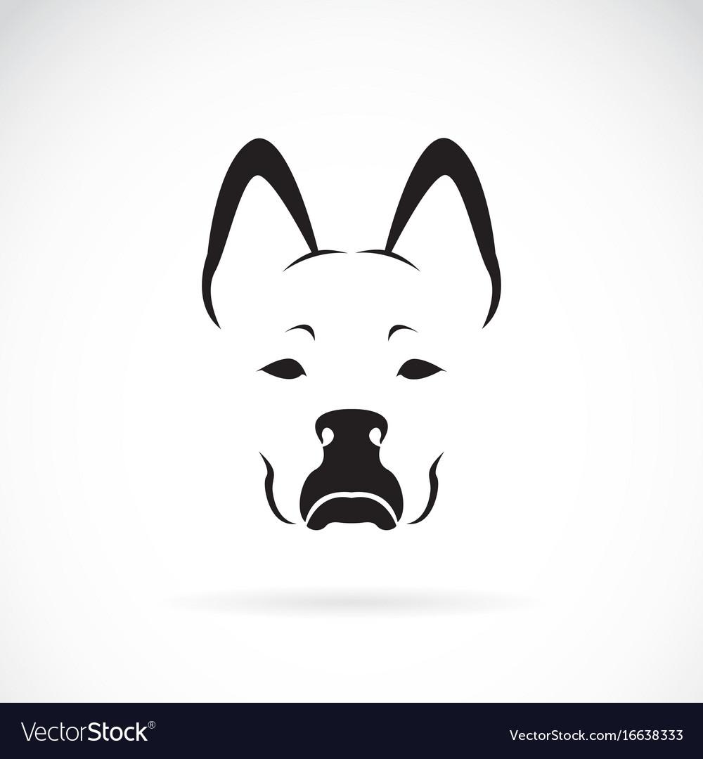 Dog face on white background pet animal