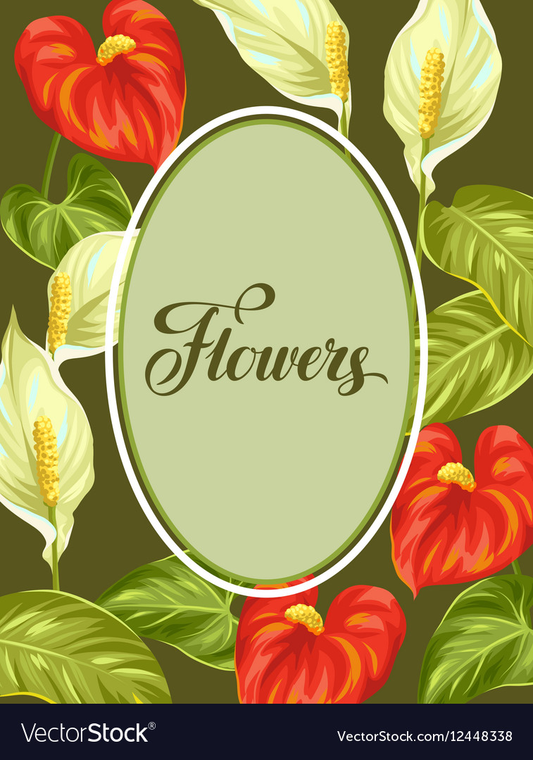 Decorative frame with flowers spathiphyllum and