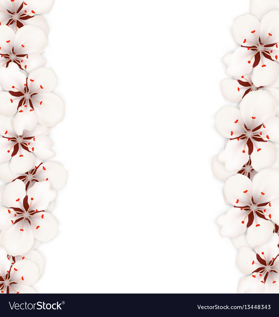 Abstract border made in cherry blossom
