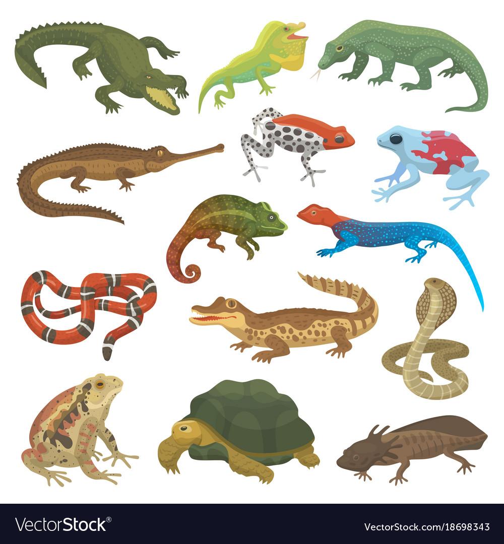 Reptile nature lizard animal wildlife wild