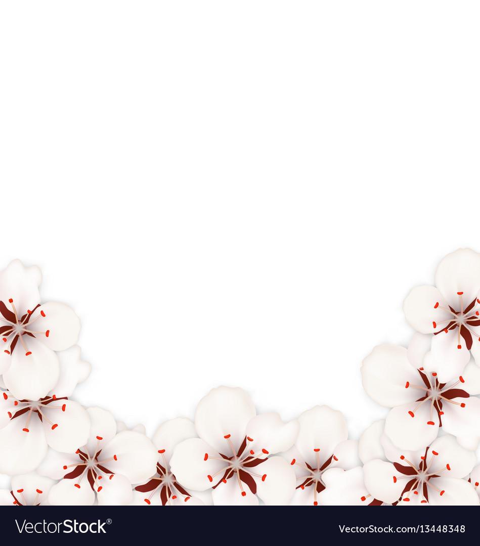 Abstract border made in sakura flowers blossom