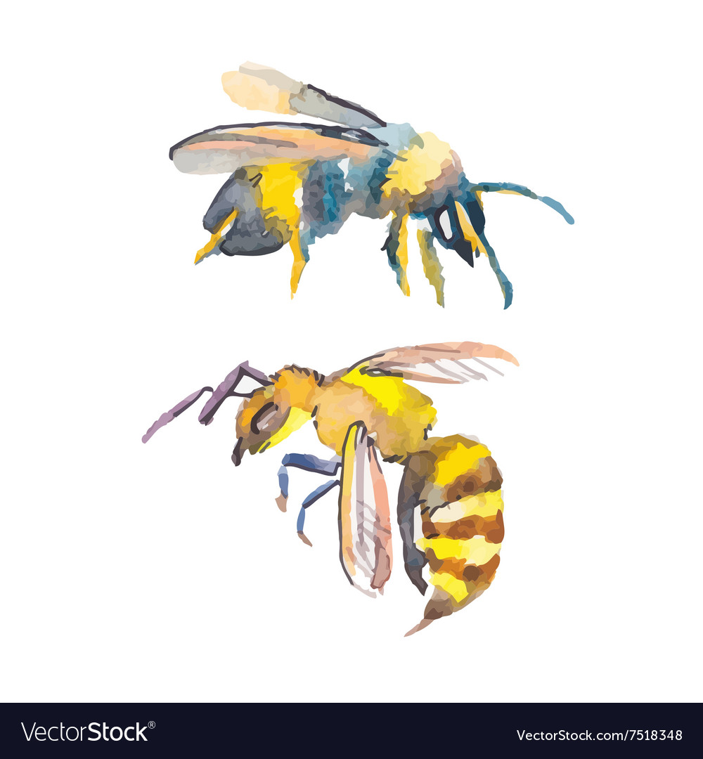 Bee isolated on white background watercolor