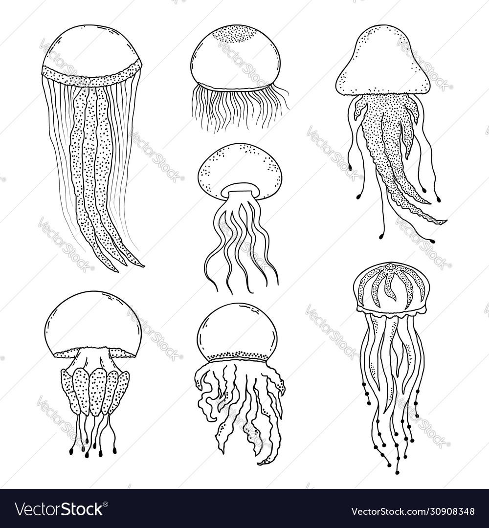 Set jellyfishes
