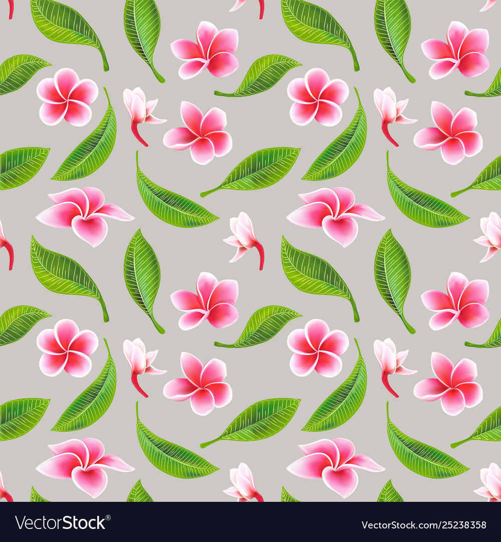 Exotic tropical flowers hibiscus frangipani and