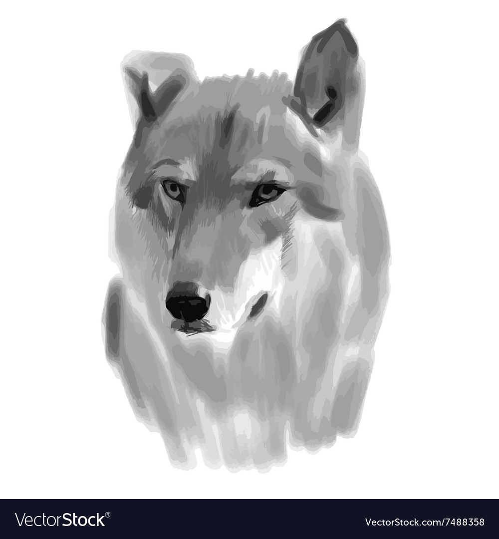 Sketch of a wolf face