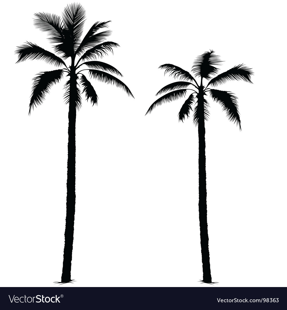 palm tree silhouette royalty free vector image