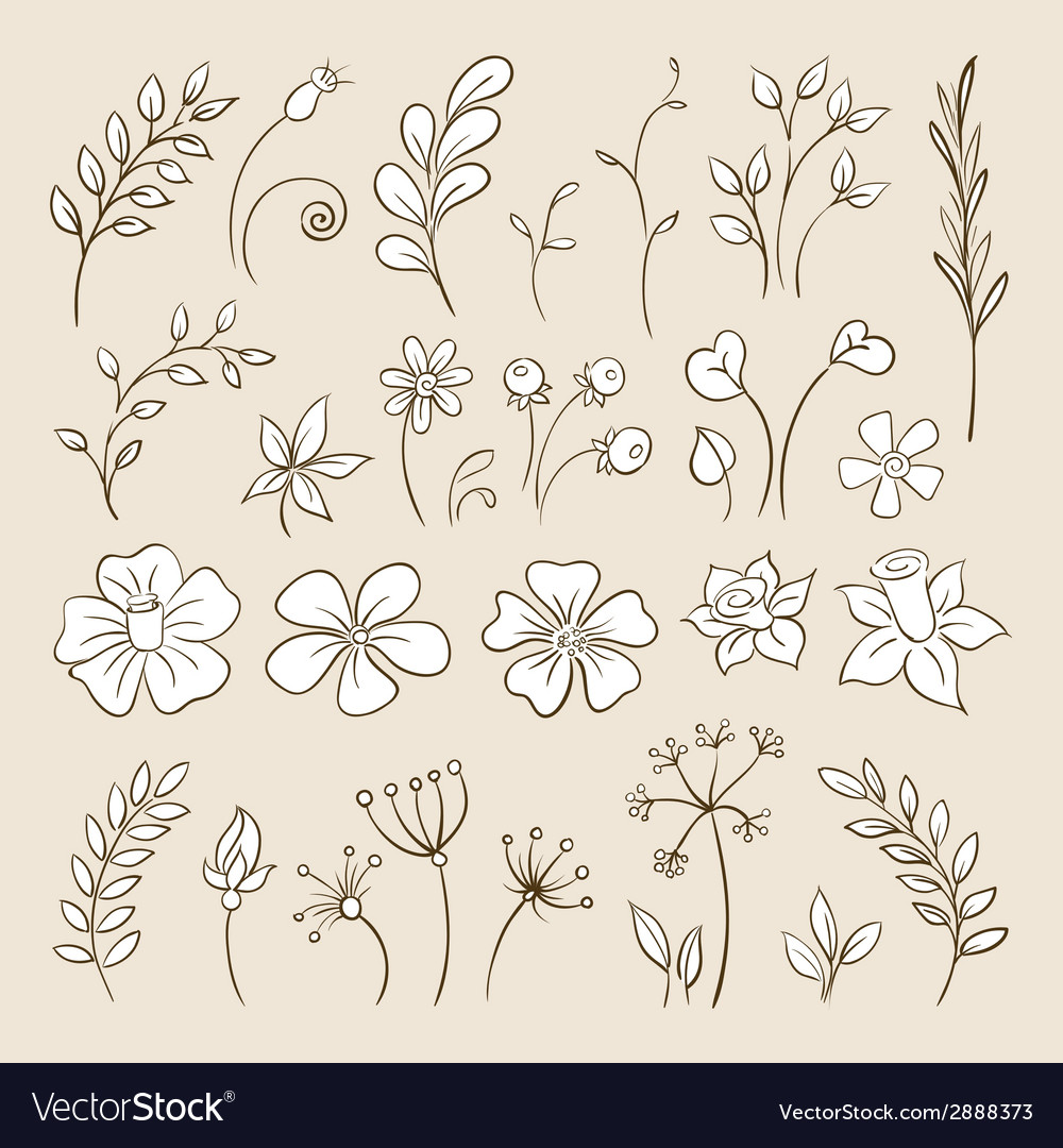 Doodle elements for design Flowers buds leaves vector image