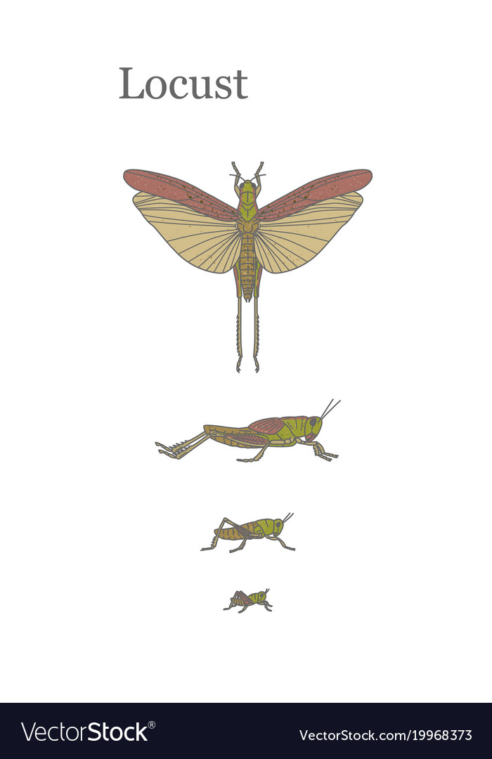Locusts - fairly large insect that can damage