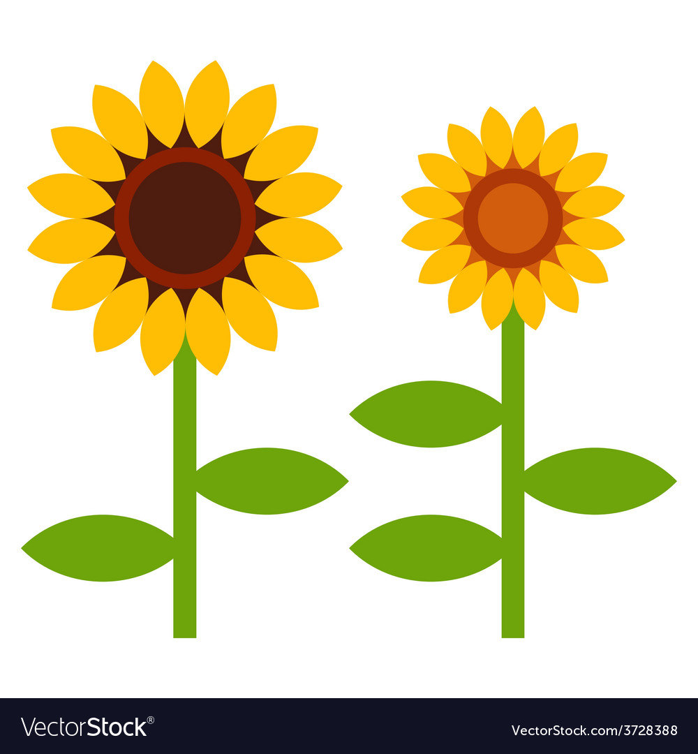 Sunflowers symbol vector image
