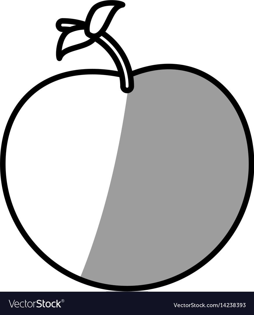Apple fruit picnic shadow