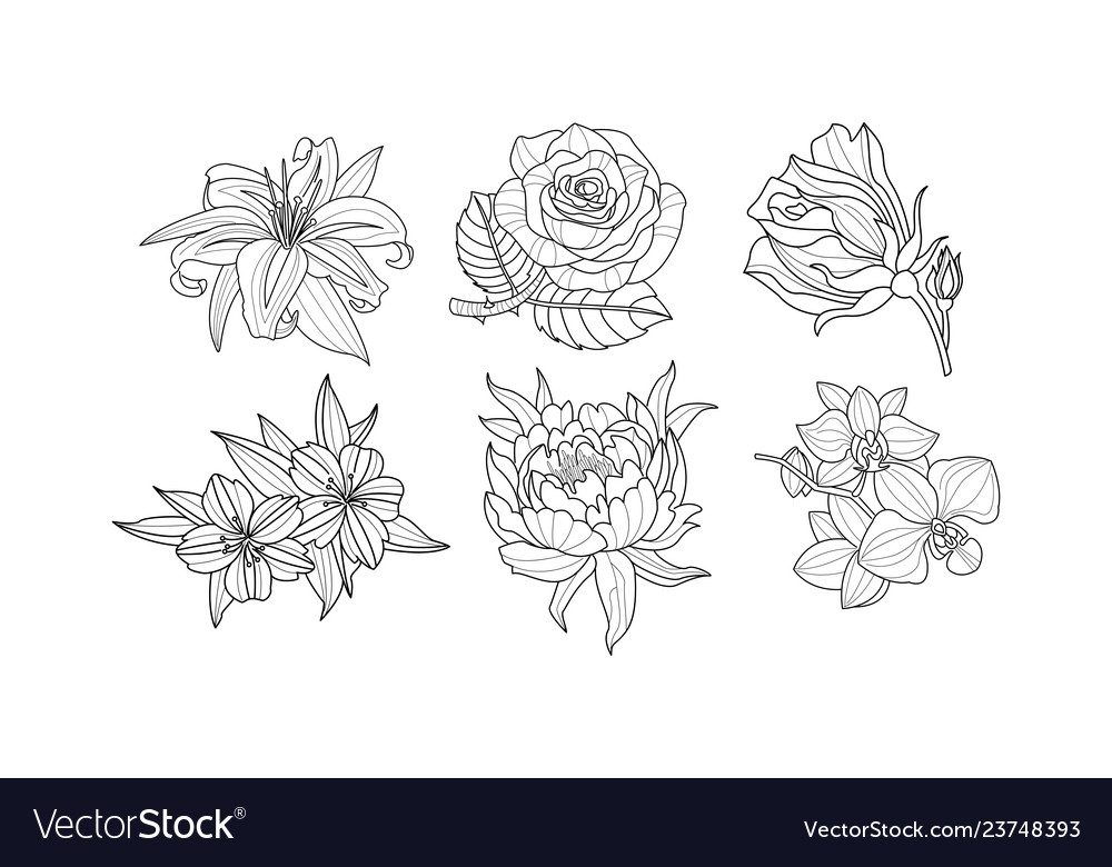 Set beautiful hand drawn flowers