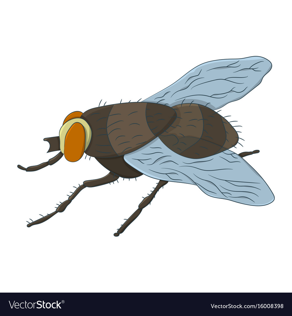 Colorful housefly musca domestica Royalty Free Vector Image