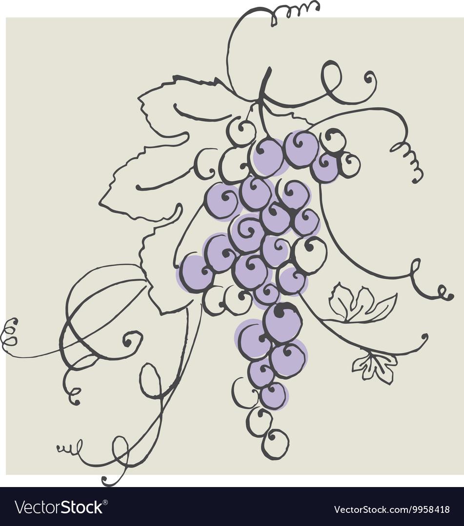 Hand drawn of blue grape pastel color